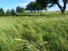 Szendrő meadow